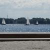 Das 50. Sundschwimmen 2014 zwischen Rügen und Stralsund
