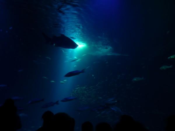 Ozeaneum Stralsund: Großes Becken