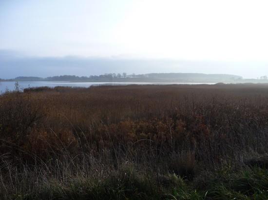Herbstnebel über dem Lebbiner Bodden